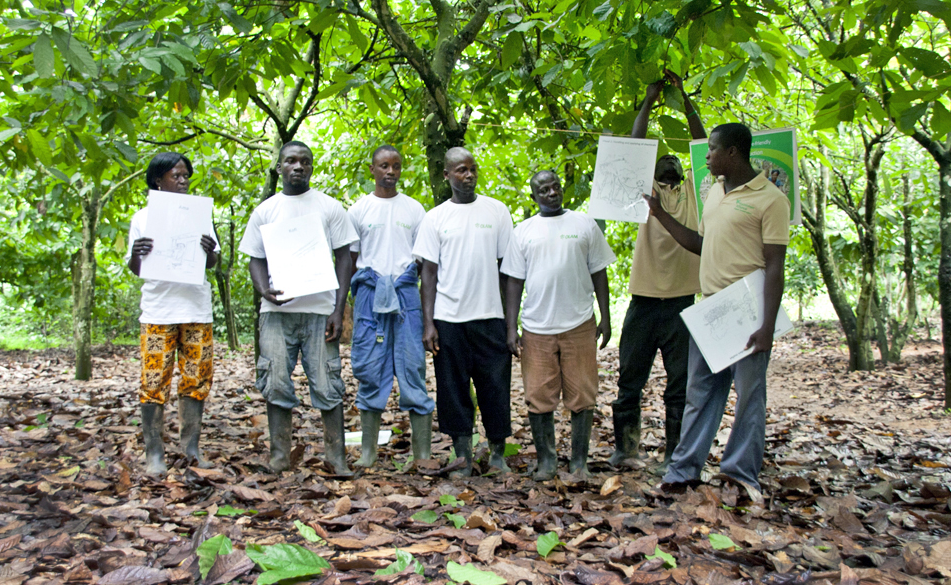 Youth urged to venture into cocoa farming