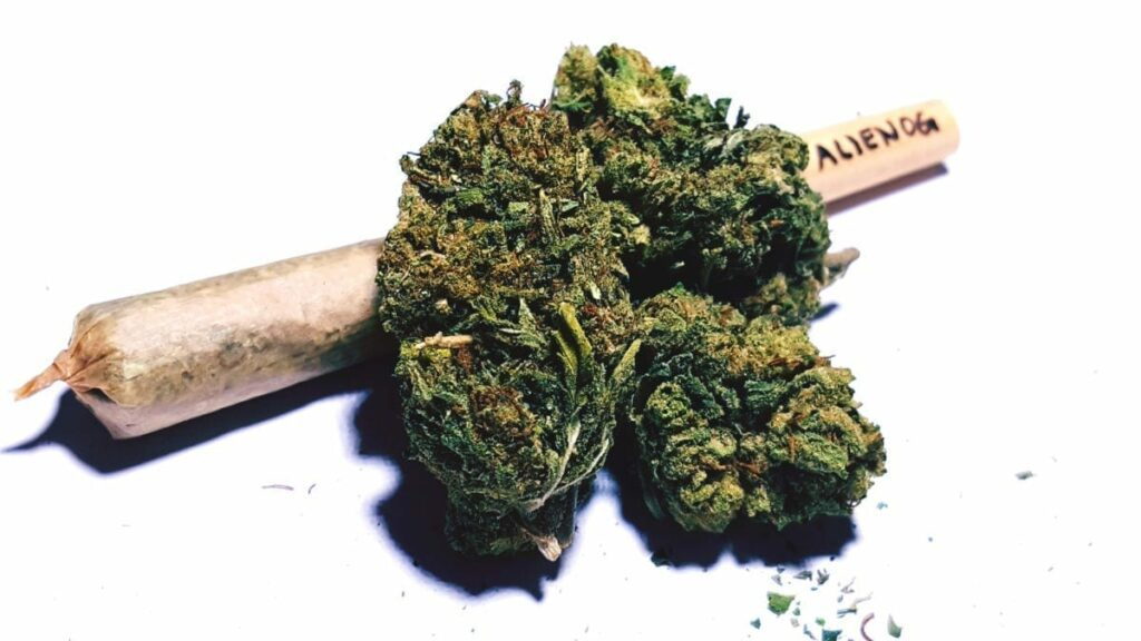Court stops marijuana decriminalization demo